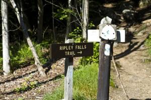 Ethan Pond Trail / Ripley