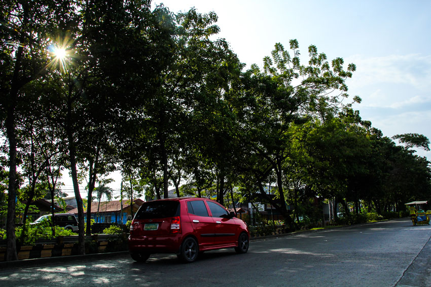Local officials to decide fate of trees in Dacudao canal area
