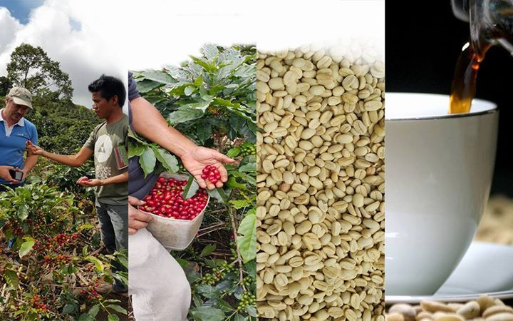 Davao to host annual coffee summit