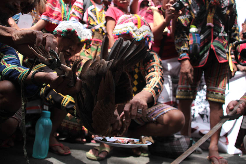 "RITUAL. A Lumad leader performs the blood ritual called ""Pamaas"" to call for the abolition of the National Commission on Indigenous Peoples during a protest rally at the NCIP national headquarters on Oct. 17."