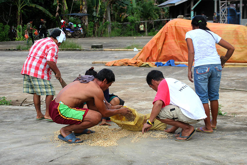 Farmers hastily put away their grain to keep them from being wet moments after a slight drizzle started to pour in Barangay Makopa, Laak, Compostela Valley on Tuesday, Jan. 10. (Paulo C. Rizal/davaotoday.com)