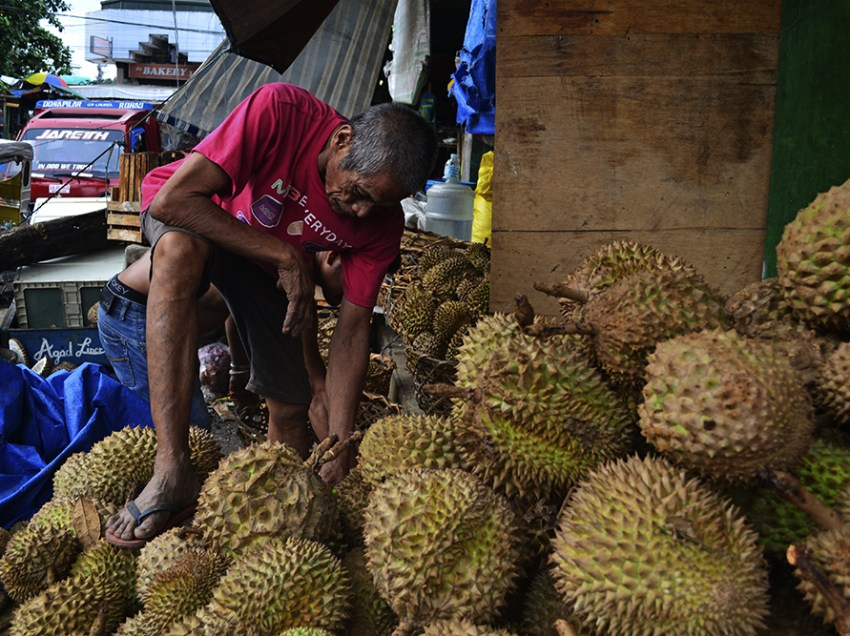 Durian production in Davao to fall 20 percent due to drought