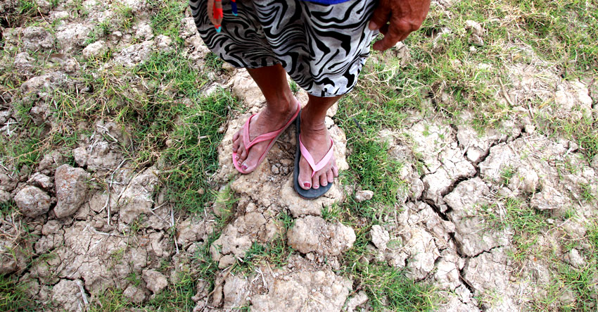 Months of dry spell ruin farmlands in North Cotabato town