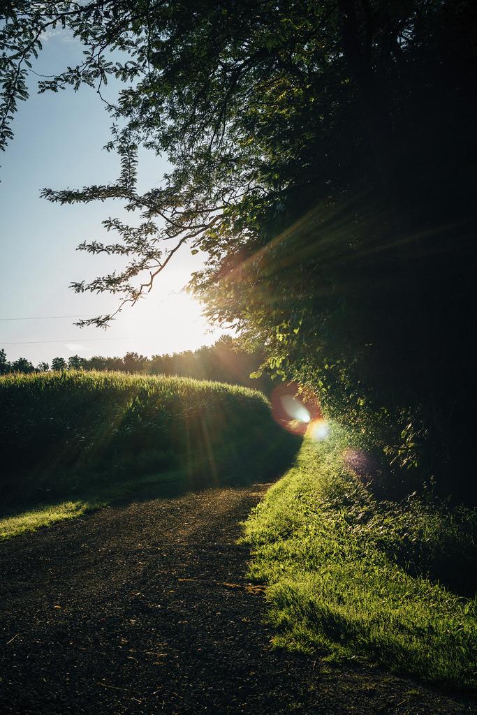 Sunrise In A Driveway