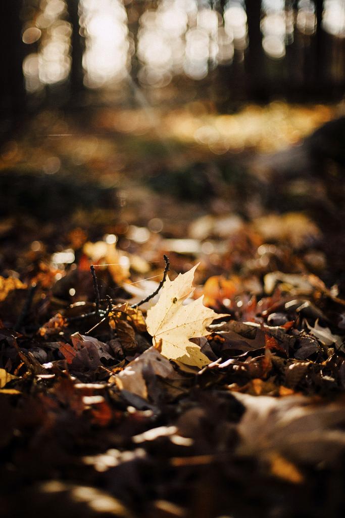 Fade to Autumn