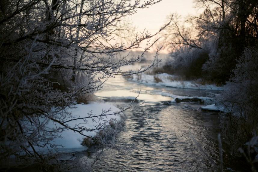 Branching Out - Kalamazoo River