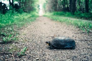Turtle!