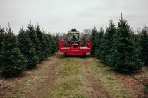 Tree Shopping - Tractor