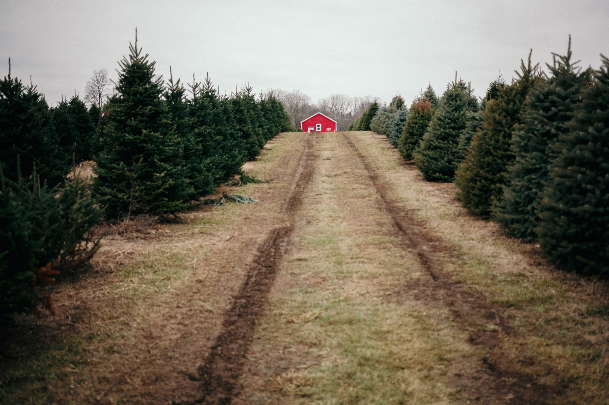 Tree Shopping - Gwinn's