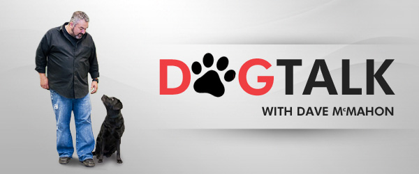 dogtalk-top