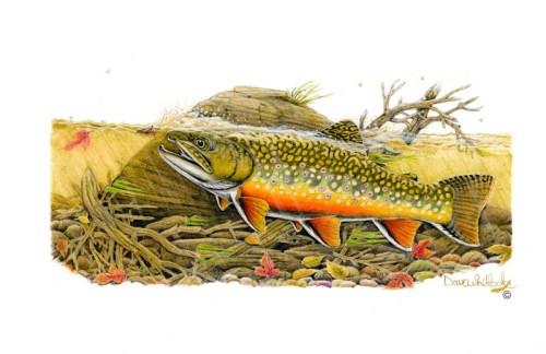 Brook – Sportfish