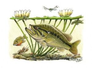 Largemouthmorgasbord