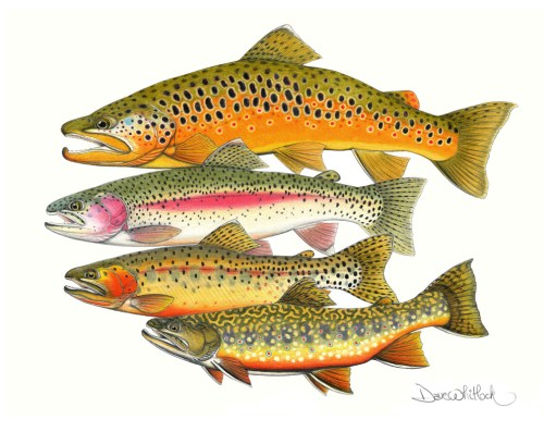 A Fly Fisher's Magnificent Four
