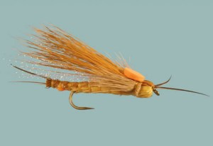 whitlocks-egg-laying-adult-stone-salmonfly2