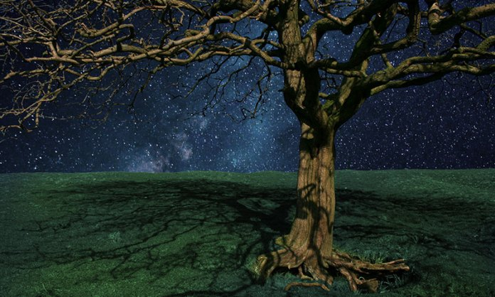 Gnarled Tree at Night Scenery