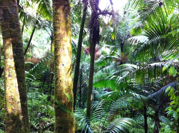 There was a big tree on the trial, but your view would mostly be of lush tropical forests and vegetation