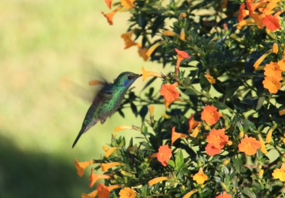 Ok... one last awesome hummingbird shot!