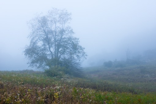 Fog rolls through a mountain meadow in WV.