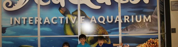 SeaQuest Interactive Aquarium Sneak Peak!