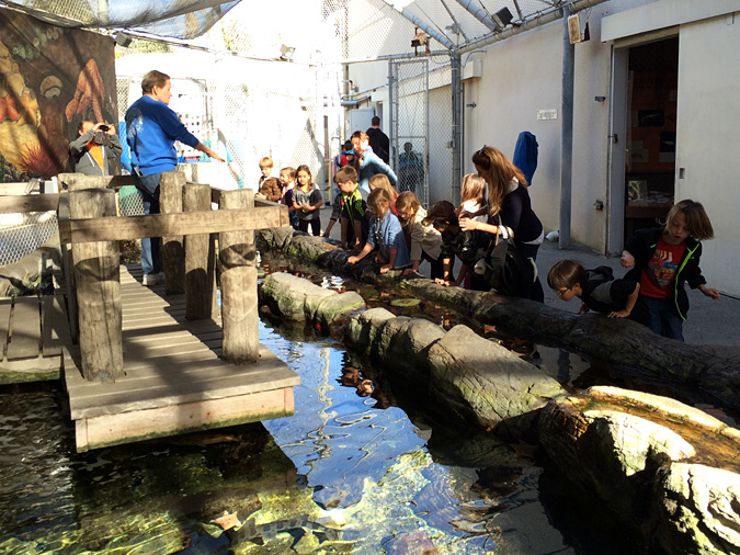 Cabrillo Aquarium touch tank