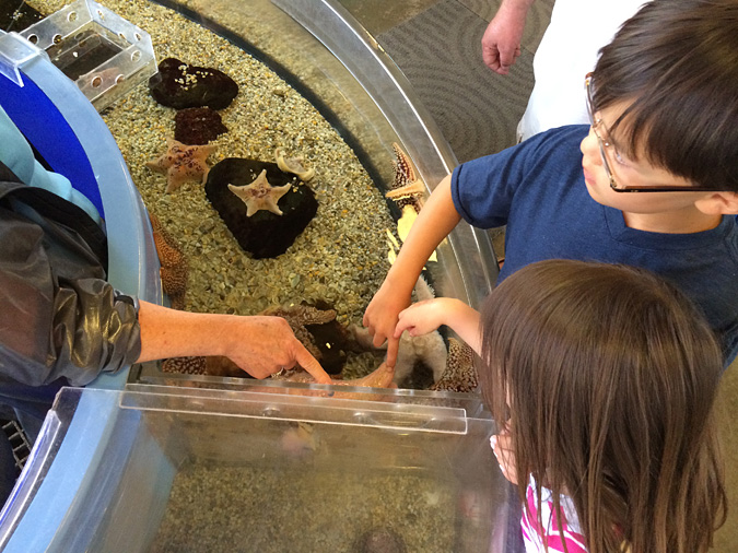 Ocean Institute touch tanks