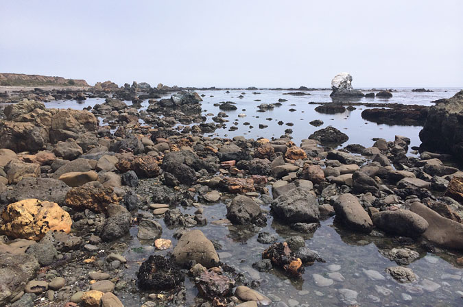 Intertidal habitat of Estero Bluffs State Park is unlike anything I've seen in California