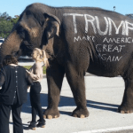 The die-hard fan who donated this elephant to a Florida Trump rally is a notorious animal abuser