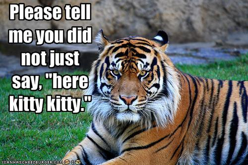funny-pictures-tiger-does-not-appreciate-being-called-kitty