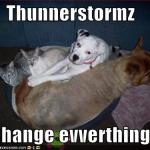 funny-pictures-cats-and-dogs-cuddle-during-thunderstorm