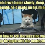 funny-pictures-cat-does-not-want-to-get-neutered