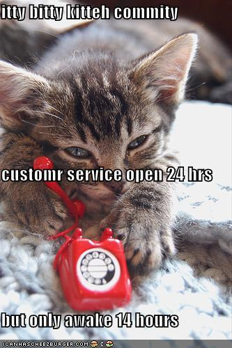 funny-pictures-itty-bitty-kitty-committee-customer-service-hotline