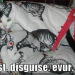 funny-pictures-cat-has-a-good-disguise
