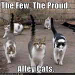 funny-pictures-the-few-the-proud-alley-cats