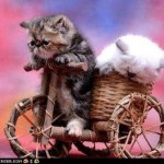 kitty rickshaw bicycle