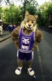 New-York-University-mascot-Bobcat