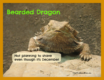 Bearded Dragon Not planning to shave even though it's December DearKidLoveMom.com