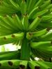 Going Bananas DearKidLoveMom.com
