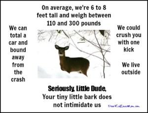 Seriously Little Dude, Deer vs little dog DearKidLoveMom.com