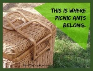 Picnic ants belong outside at picnics not in my kitchen. DearKidLoveMom.com