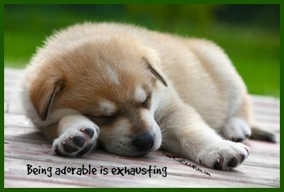 Being Adorable is Exhausting DearKidLoveMom.com