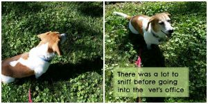 There's a lot to sniff before we go into the vet. DearKidLoveMom.com