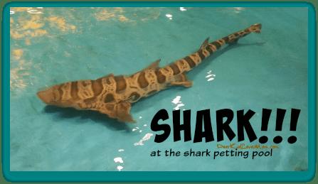 Shark petting at the Newport Aquarium. DearKidLoveMom.com