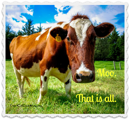 Moo. That is all. How to tell the difference between cows and college students. DearKidLoveMom.com