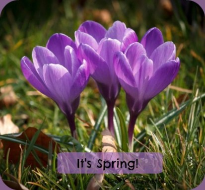 The crocuses are chirping Happy Spring! DearKidLoveMom.com
