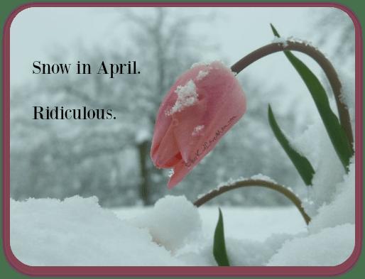 Snow in April. Ridiculous. DearKidLoveMom.com