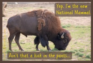 The Bison: The new national mammal. DearKidLoveMom.com