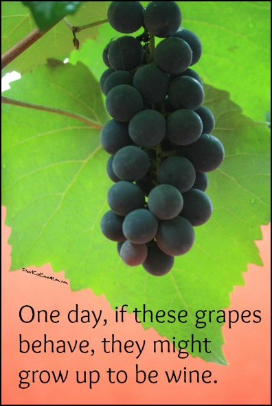 One day, if these grapes behave, they might grow up to be wine! Happy National Wine Day! DearKidLoveMom.com