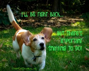 I'll be right back...but there's important sniffing to do! DearKidLoveMom.com
