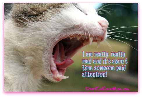 I am really, really mad and it's about time someone paid attention! DearKidLoveMom.com