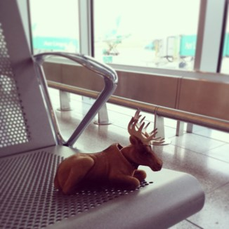 Waiting in Dublin for the flight to Hamburg. By this point, Bob is bored. He's not the only one. But soon, adventure awaits!